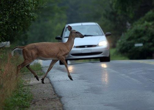 "This time of year is ""rutting"" or mating season for deer and deer seem to pop out in front of motorists when they least expect it."