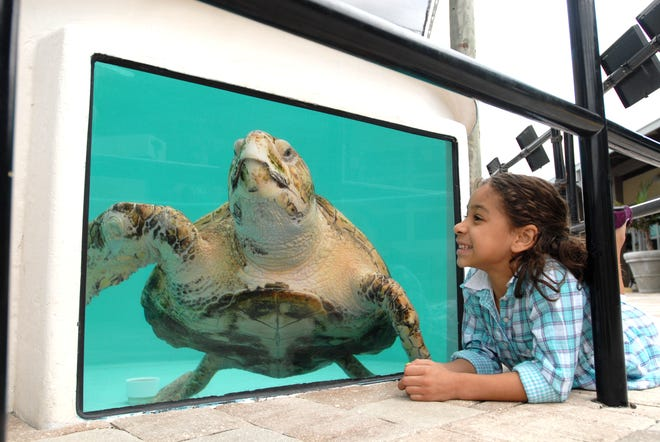 From family fun at Loggerhead Marinelife Center to date night art classes at Armory Art Center, MOSAIC is back with offers, events and more.