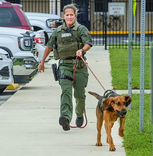 St. Johns County Sheriff's Deputy Melanie Merritt follows her bloodhound, Daisy, as they track a person during a demonstration at the Sheriff's Office complex in St. Augustine on Monday. Daisy is one of three bloodhounds used to track missing people by the Sheriff's Office.