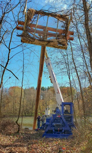 Rick Bowers (left) and Zach Collins raise the eagle nesting platform along the northern shore of Pleasant Hill Lake.