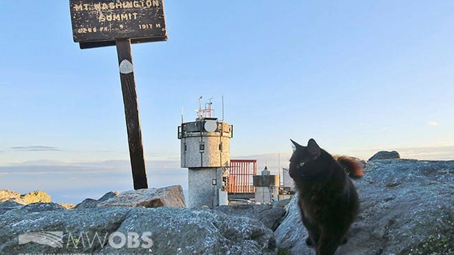 In this June 28, 2020 image provided by Mount Washington Observatory, Marty the cat walks on a boulder outside the Mount Washington Observatory in North Conway, N.H.
