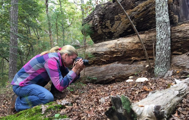 The Social Butterfly Kristi K. Higgins takes pictures of mushrooms in Chesterfield, Va. in October of 2020.