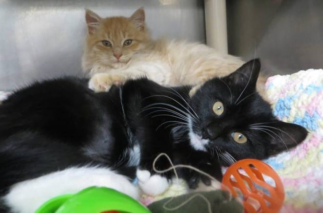 Edwin and Ellie are 4-month-old bonded siblings who will need to be adopted together.