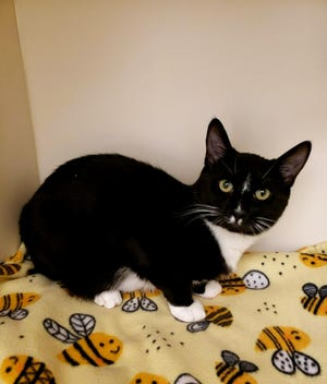 August is the Kitsap Humane Society's pet of the week.