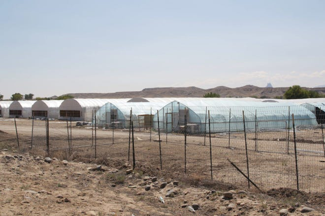 Greenhouses are pictures on Sept. 23 at a hemp farm on Mesa Farm Road in Shiprock, N.M. The Navajo Police Department continues to enforce a court order to stop the cultivation of the plant.