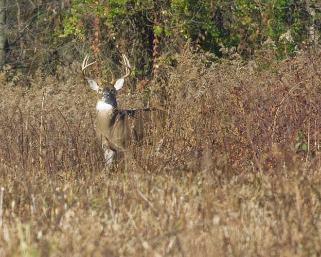 The extra weekend of gun hunting for white-tailed deer in Ohio resulted in 15,203 deer taken by hunters, according to the Ohio Department of Natural Resources Division of Wildlife.