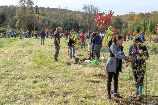 Delaware Nature Society is seeking volunteers to help plant trees at Middle Run Natural Area in Newark from 9 a.m. to noon Nov. 14.