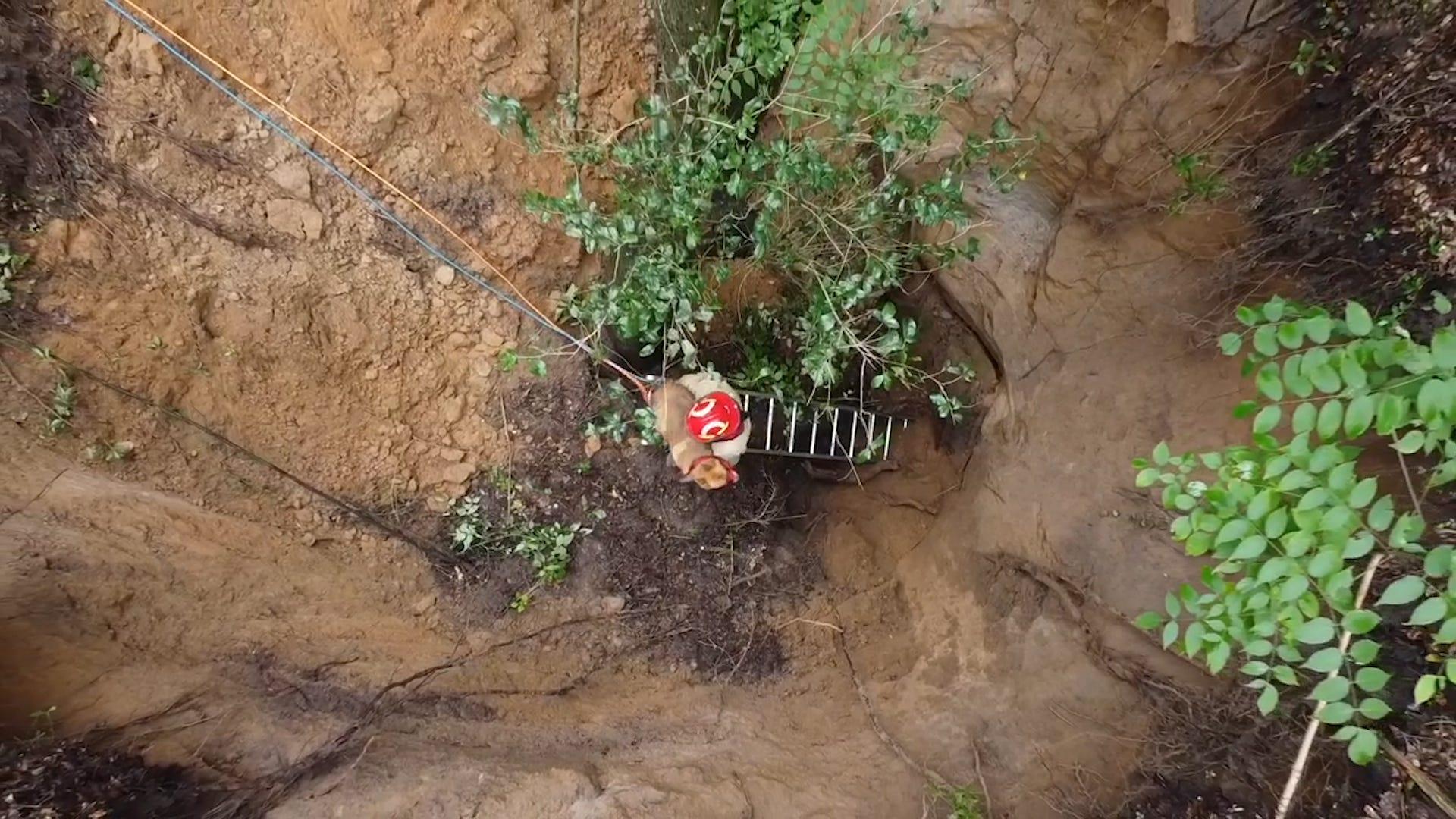 Golden retriever is rescued from 40-foot sinkhole