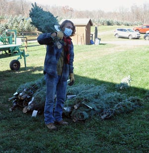 Todd Singleton transfers one of the last trees from the baler to its shipping carton as part of the Ohio Christmas tree Association's Operation Evergreen.