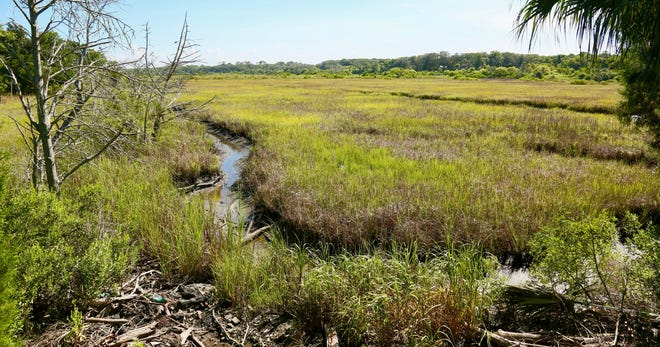 The North Florida Land Trust recently bought three acres of conservation land — spanning two parcels — for the city of Fernandina Beach that will be added to the Egans Creek Greenway.