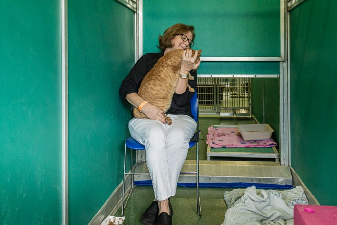Palm Beach County Animal Care and Control Director Dianne Sauve sits in a converted dog kennel and plays with Sonnie, one of the cats that are available for adoption at the West Palm Beach facility Nov. 12.
