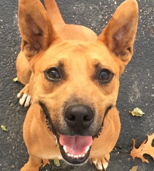 Cole is a young mixed-breed available through EGAPL The Heart of Rhode Island Animal Rescue League.
