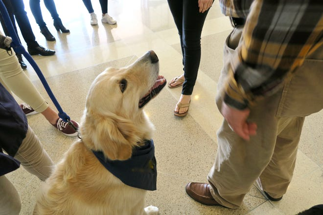 Therapy dogs can have a profound effect on hospitalized or convalescing people but we cannot rush into it. Max should be certified for this work.