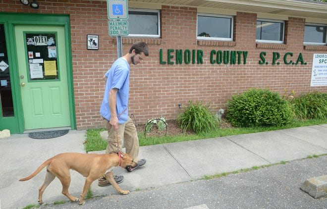 Robert Vernatt, Jr. assistant manager of the Lenoir County SPCA leads a female boxer mix to the kennels Thursday. The dog was brought their by her owner and released to the SPCA in 2016.