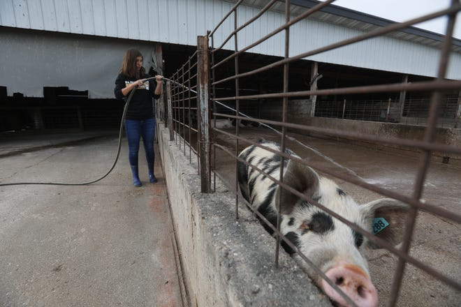 River View High School sophomore Emma Sampsel hoses out a hog pen on the school's agriculture campus in Warsaw. The district has an operating farm, run by students and their advisers, next to River View High School.