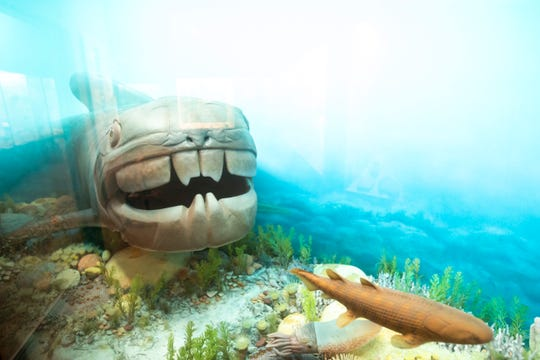 A Dunkleosteus fish is seen inside a Devonian coral reef diorama in an exhibit in the University of Iowa Museum of Natural History, Wednesday, Nov. 11, 2020, at Iowa Hall on the University of Iowa campus in Iowa City, Iowa.