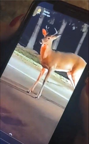 This image is from a video posted on social media Wednesday. A man struck the deer on the head with a hammer several times, killing it, the state Department of Natural Resources said.
