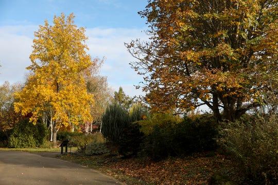 Fall colors are seen along paths at The Oregon Garden in Silverton, Oregon on Thursday, Nov. 12, 2020.