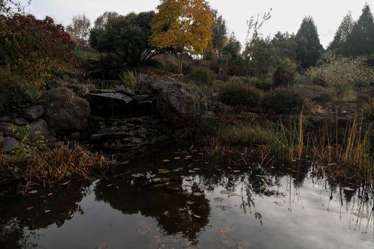 The koi pond at The Oregon Garden in Silverton, Oregon on Thursday, Nov. 12, 2020.