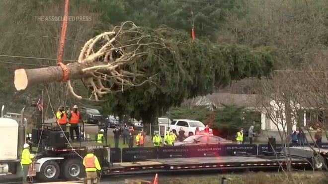 rockefeller center christmas tree arrives in new york city usa today