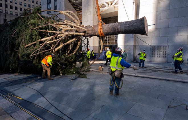 The 2020 Rockefeller Center Christmas tree, a 75-foot tall Norway spruce that was acquired in Oneonta, N.Y., is lifted while being prepared for setting on a platform at Rockefeller Center on Saturday in New York.