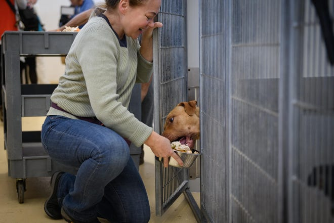 A dog starts eating its Thanksgiving meal before Jodi Plew can get the dish in the cage at the Cumberland County Animal Shelter on Nov. 25, 2019..