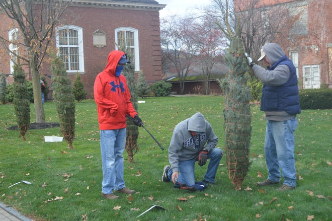 Members of the Wellsville Lions Club set up Christmas trees on the lawn of the David A. Howe Library in preparation for the annual Fantasy of Lights display in November.