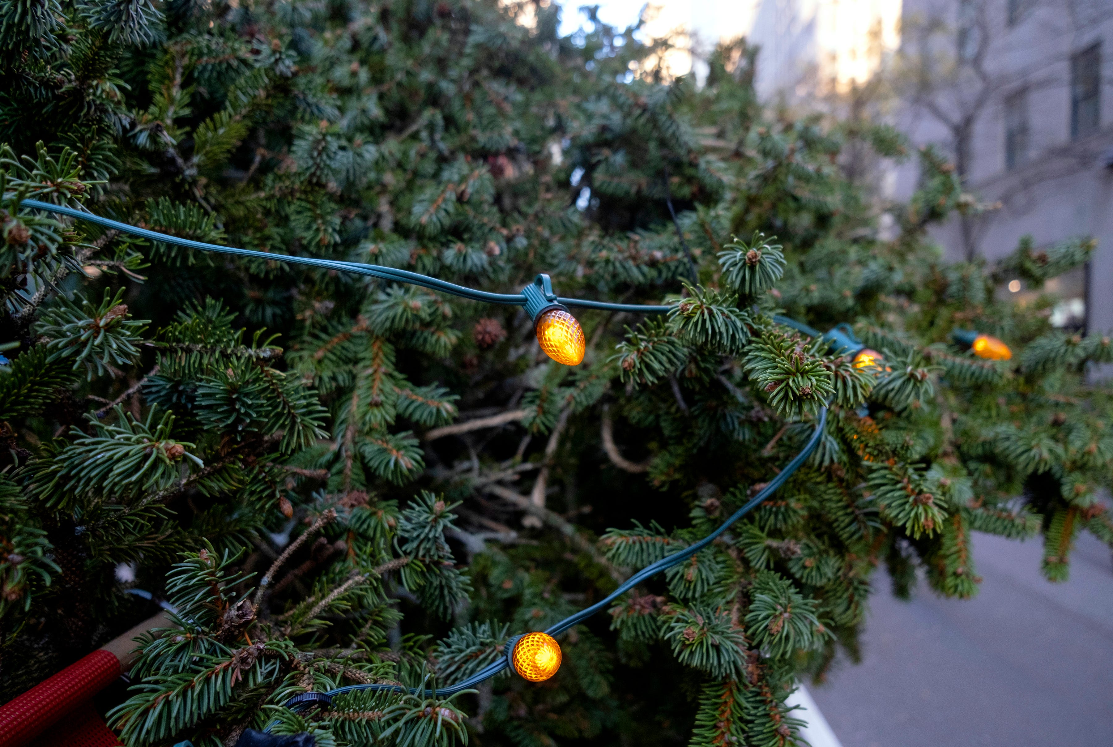Kicking off the holiday season: How to watch the Rockefeller Center Christmas Tree lighting