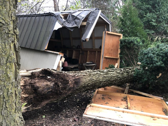 High winds downed trees such as this one in Clintonville and knocked down power lines across Ohio on Sunday, leaving thousands without electricity.