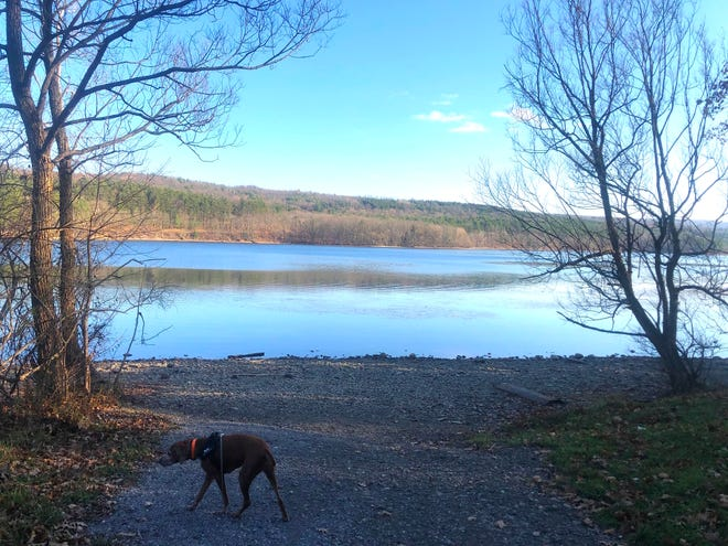 Rosie catches a scent of something wild near the lake during a walk on the Canadice Lake Walking Path near Hemlock.