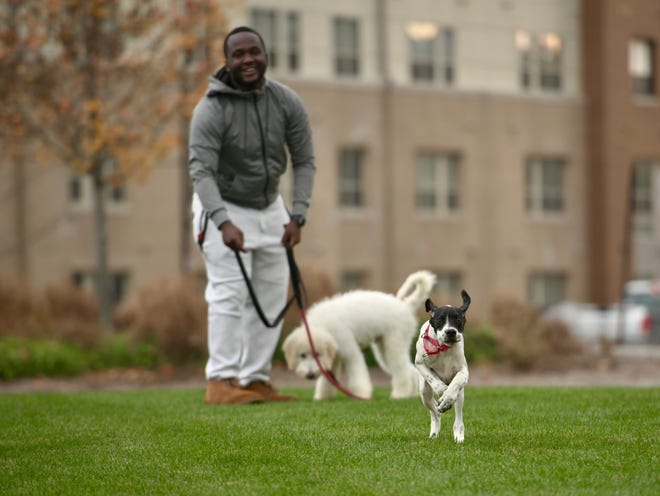 WORCESTER - With a wind storm looming and COVID-19 still keeping people home, Mutunga Ndegwa gives his puppies Ace and Onyx some much needed run-around time Sunday on the grass next to Mercantile Street.
