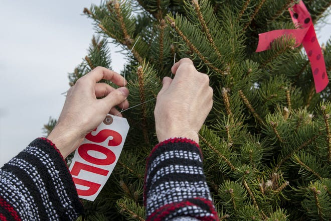 """Alex Dugasz attaches a """"sold"""" sign to the familiy's newly picked Christmas tree ."""