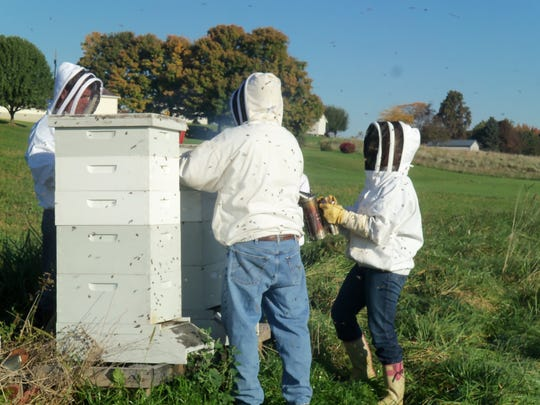 Randy and Eileen Eisenhauer have 10 hives of honeybees from which they harvest and sell honey.