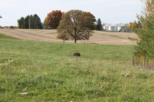 A pasture at the Eisenhauer Family Farm.