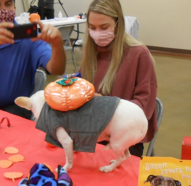 Sissy, pictured here with owner Skylar Dierschke, was the winner of the Pup-kin costume contest during the 7th annual Pumpkin Festival on Nov. 7, 2020 in San Angelo.