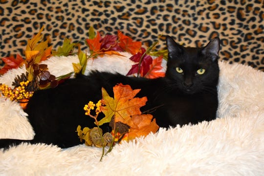If you are interested in meeting Katy Purry, please call Sun Cities 4 Paws Rescue, 623-876-8778 or 623-773-2246 after 9 a.m.