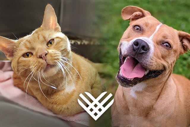 The Animal Shelter Foundation is committed to continue to help animals and families caring for pets in our community.