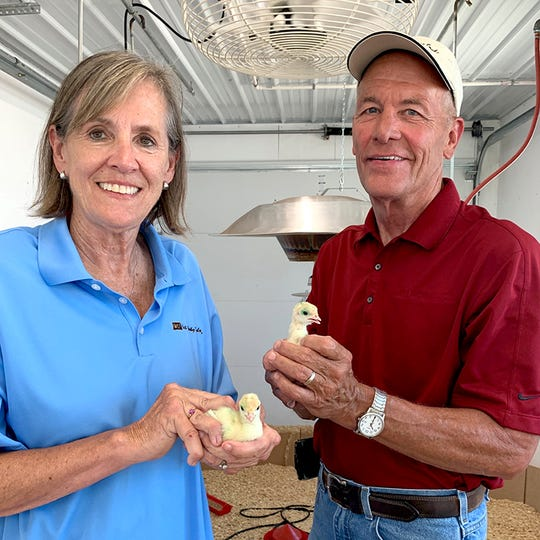 Susie and Ron Kardel of Walcott, Iowa raised two turkeys that will visit the White House for the National Thanksgiving Turkey Presentation. The turkeys will then go on to live at Iowa State University in Ames.
