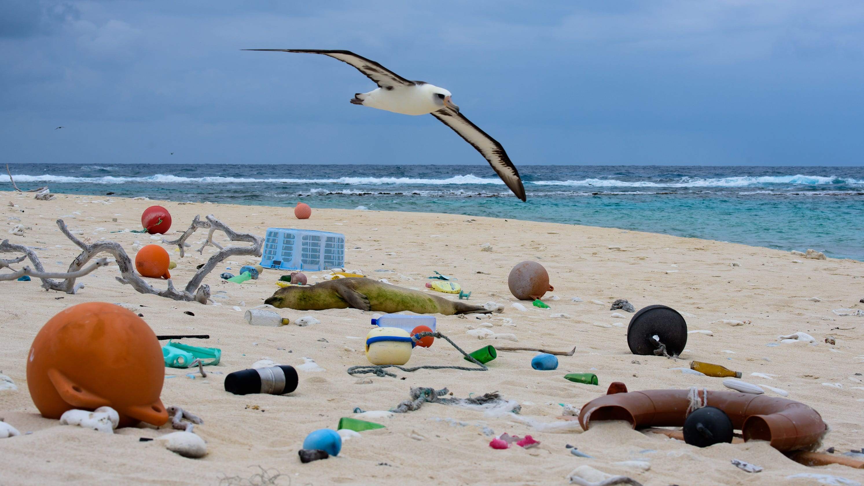 'Choked, Strangled, Drowned': Report lays out severity of plastic harming endangered marine life
