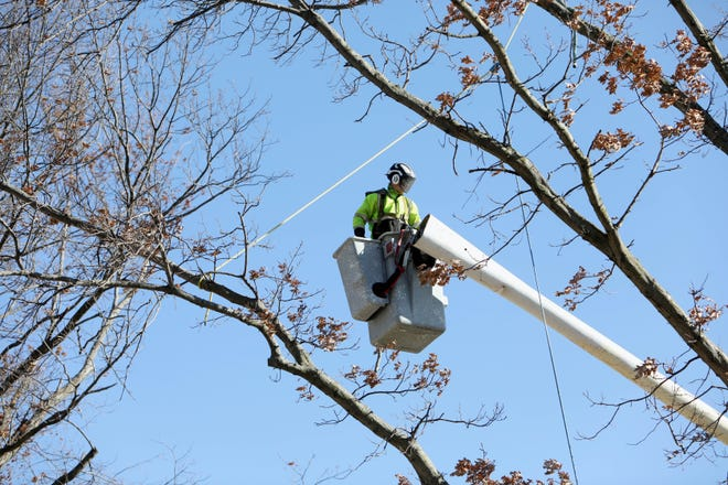 Jordin Hinman, with the city of Burlington forestry department, sets up  a rope and pulley system while cutting down an oak tree Wednesday near the corner of Louisa Street and Central Avenue in Burlington. Hinman and his co-worker, Steve Collett, were using the system to safely lower large tree limbs. The two men expected to finish the job later in the day.