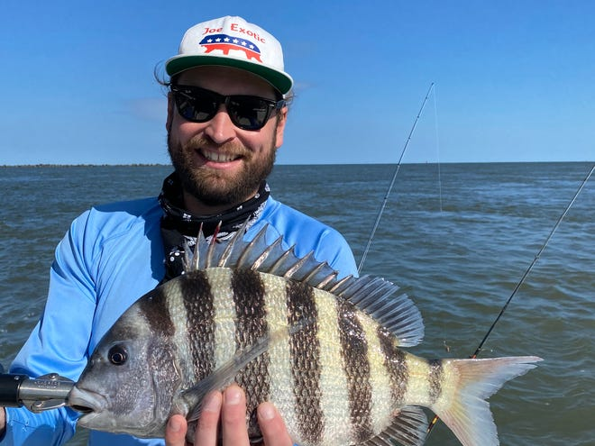 This winter's sheepshead season is off to a strong start in the St. Johns River.