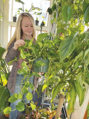 Pratt plant expert Jorja Elliott checks her greenhouse plants as she makes plans for an exhibit and sales booth at the Sawyer Fall Festival, coming this Saturday, November 21. Elliott recently started her own plant business.