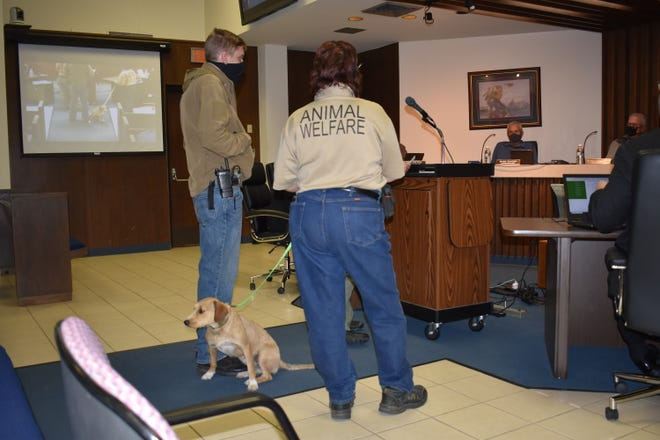 Shawnee Animal Shelter's Pet of the Week was presented at Monday's City Commission meeting.