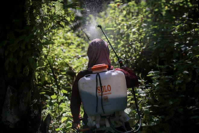 A female worker sprays herbicide in a palm oil plantation in Sumatra, Indonesia, on Sept. 8, 2018. Many women are hired by subcontractors on a day-to-day basis without benefits, performing the same jobs for the same companies for years and even decades. They often work without pay to help their husbands meet otherwise impossible daily quotas.