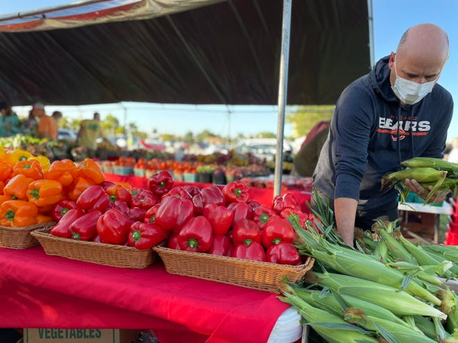 A man wearing a mask grabs corn on the cob during the first day of the Marco Island Farmers' Market at Veterans' Community Mark on Nov. 18, 2020.