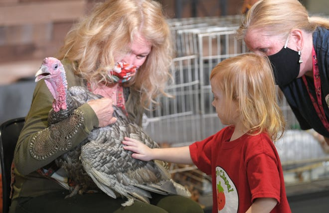 Franklin resident Laura Turner brings her  turkeys to show and tell for children at Berry's Chapel Preschool in Franklin on Tuesday, Nov. 17, 2020.  Turner has been educating children about turkeys for 30 years.