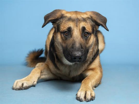 Interested adopters can view available pets, like Bubba, and schedule an appointment online at azhumane.org/adopt.