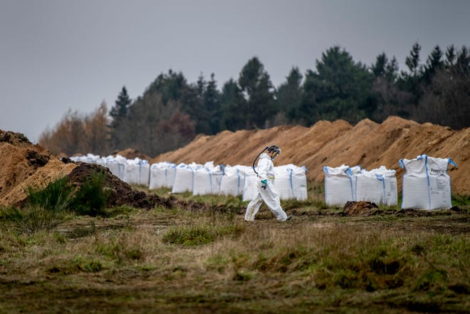A mass grave is prepared as Danish health authorities, assisted by members of the Danish Armed Forces, work to dispose of dead mink in a military area near Holstebro, Denmark, Monday, Nov. 9 2020. Denmark will cull about 17 million mink after a mutated form of coronavirus that can spread to humans was found on mink farms.