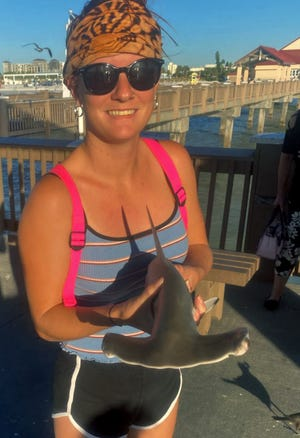 Shineigh Brooke of Clearwater caught this 3-foot scalloped hammerhead shark while fishing at Big Pier 60 in Clearwater on Tuesday.