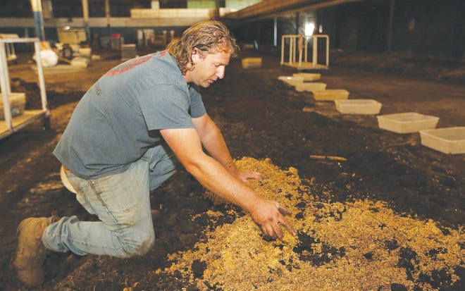 Dan Rasure incorporates brewer's grain into the dirt to feed his red wiggler worms. Rasure also feeds them manures, food waste and spoiled forages including hay, straw, and corn stover.
